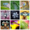 How to do macro photography with a Canon 500D/550D