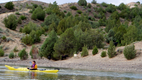 Grab a kayak, canoe or tube and hit one of the rivers on a hot summer day.  You will love it.