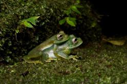 10 Bizarre Mating Habits of Animals