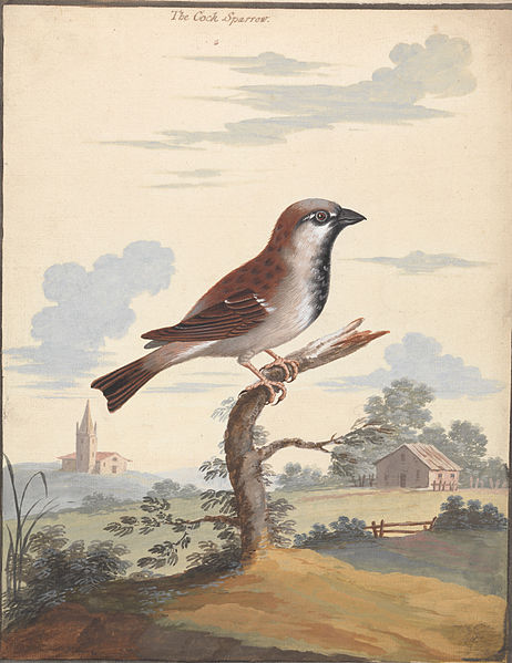 """""""The Cock Sparrow"""" by George Edwards"""