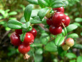 Lingonberries Health Benefits, Lingonberry Nutrition Facts, Uses