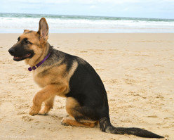 Five Most Heroic Dog Breeds