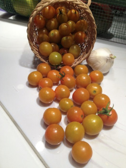 Sun Gold tangerine color cherries just keep on coming all summer long.