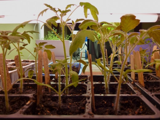 Allowing for seed germination rates, increase seed by 10%.