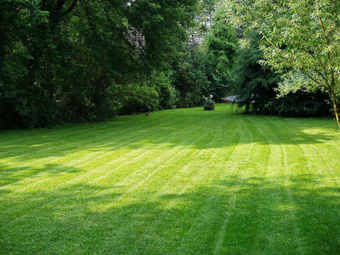 All cool-season grasses need at least five to six hours of direct sunlight every day to thrive. Some shade, however, is not bad, especially when it helps cool the grass.