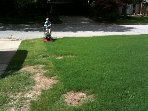 A lawn needs constant attention otherwise areas can fade away.