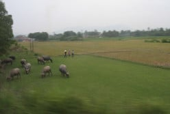 Age old scene from the window of the train