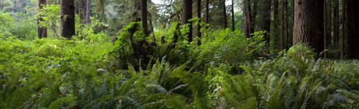 Ferns and redwoods -- is this love?