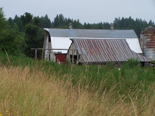 Large farms, large volume, lower price