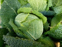 A savoy type cabbage that you can grow and use for making stuff cabbage. Hope you try this kind of cabbage and have fun growing it for your friends and family.