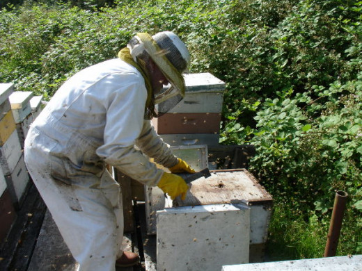A man tending a bee hive