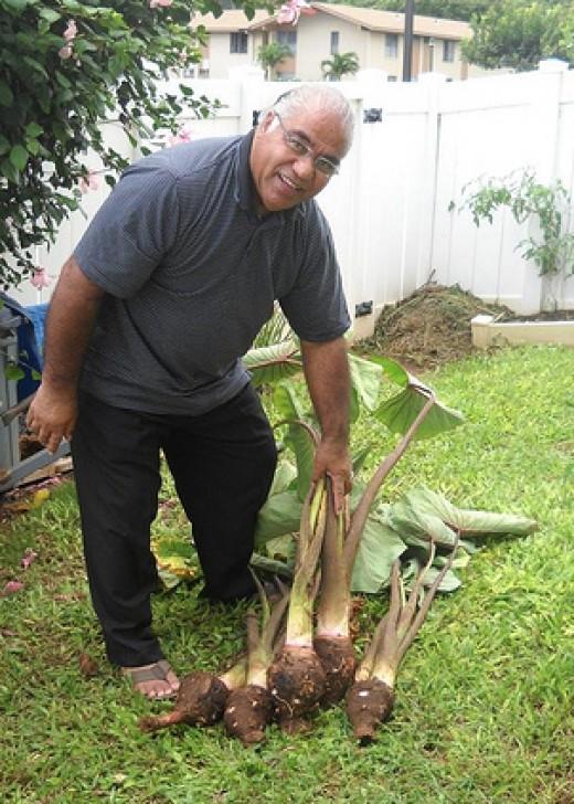 My husband raising taro in Hawaii.