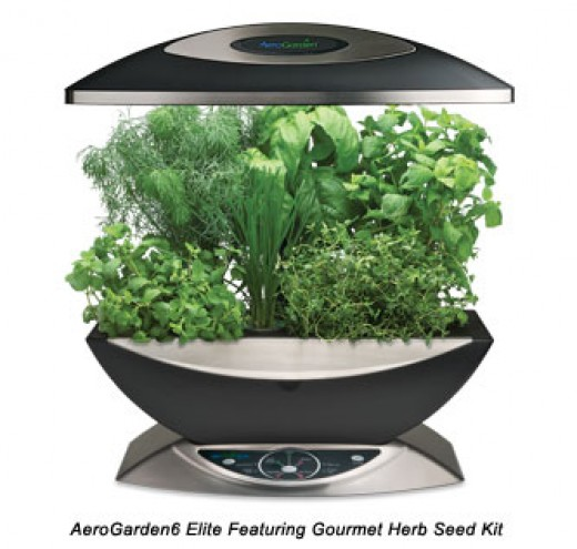 Hydroponic Herb Garden at Home