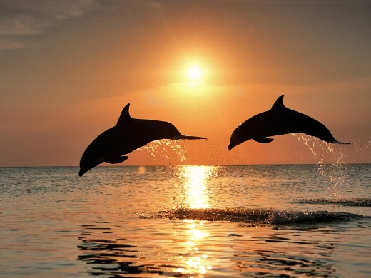Dolphins leaping above their water domain at sunset.
