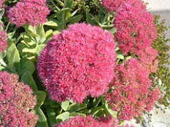 Seven Drought Tolerant Garden Plants