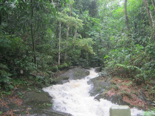 The Holy Spirit River that flows from the rainforest