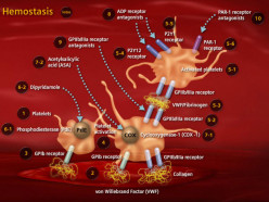 General Considerations And Physiological Importance Of Normal Hemostasis To Man