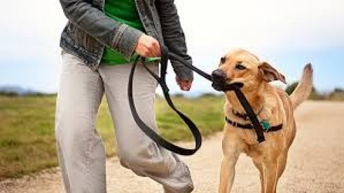 Walk your dog or let your dog walk you. Either way both of you will get great exercise. Not to mention canines simply love walking like we love going on vacation.