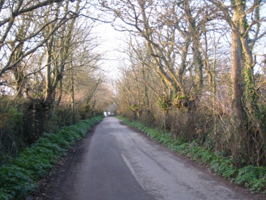A photo of the road leading from Mawnan Church to town. I can picture The Owlman lurking in the trees here.