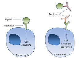 Inhibits Cancer Cell