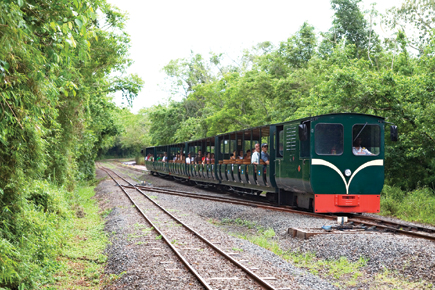 We also had a train ride appropriately called Eco Train or Rainforest Ecological Train where we had the chance to access different walkways.