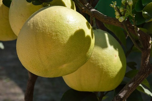 Even the larger fruit varieties can be gown in pots. See some great tips here.
