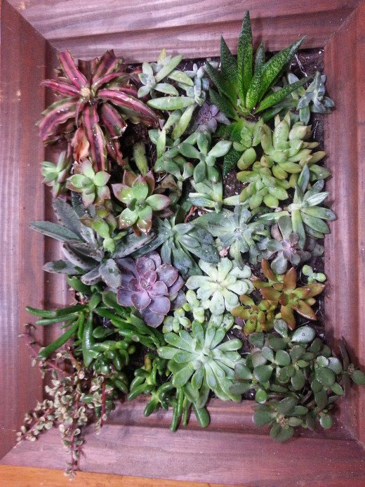 Live Succulent Wall Painting Displayed at a Different Angle