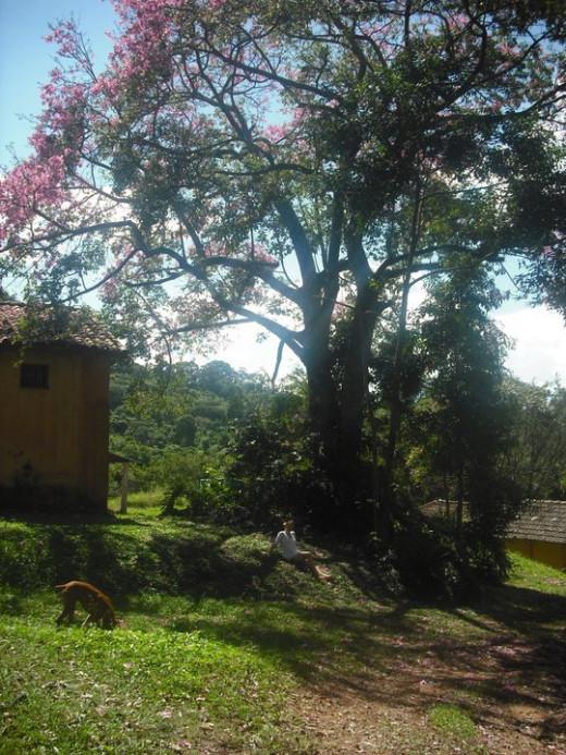 Near the housing quarters of Fazenda Ambiental Fortaleza