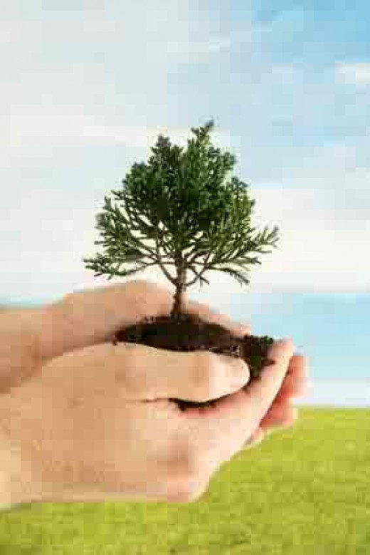 It's up to us to plant more trees...