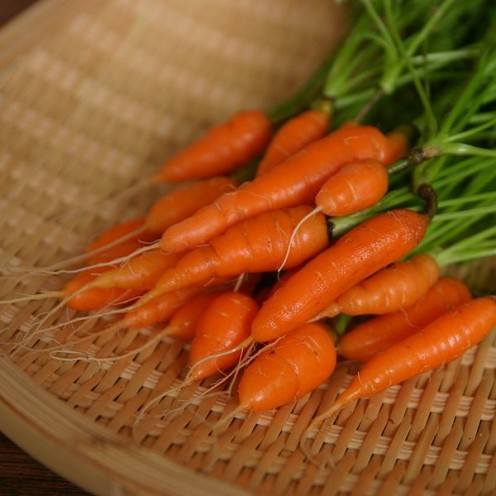 Baby Carrots grown in a container and enjoy eating them raw or cooked. They can be used on a vegetable tray or cooked in a culinary dish.