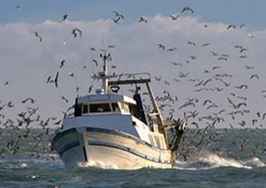 A familiar sight in a coastal town: Seagulls swooping around a fishing vessel.