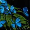 sarakatemorris profile image