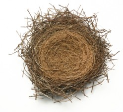An Empty Nest  ~ Now What?
