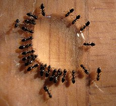 Natural Ways To Kill Ants Inside The House