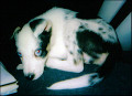 How I Trained a Deaf Puppy and Helped Him Live a Full Life