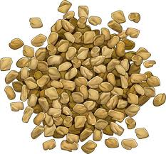 "Fenugreek seeds. ""A cloverlike Eurasian plant (Trigonella foenum-graecum) having white flowers. Its mildly bitter seeds and aromatic leaves are used as flavorings."""