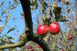 The Apple Tree and Developing Personal Sustainability