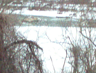 A second picture - Rappahannock River on January 28. 2014.