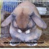 Bunny Freak profile image