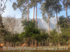 Chiang Dao Nest: A Review of Accommodations in Chiang Dao