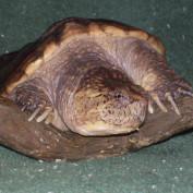 animalman profile image