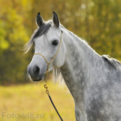 Gentling Is An Effective Horse Training Method