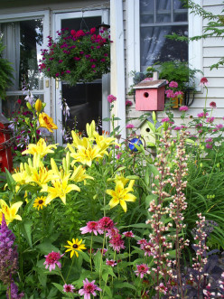 How To Transform Your Yard into a Wildlife Habitat