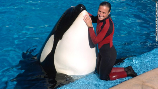 Dawn and Tilikum
