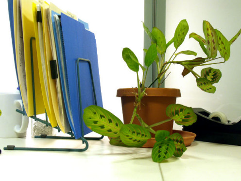 An office table with plant and discs