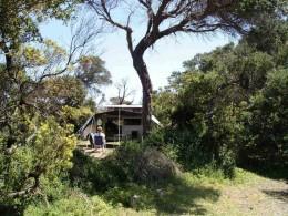 Campsite in the tea trees