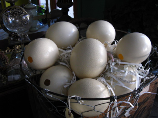 Any sized eggs can be blown -- including Ostrich eggs!