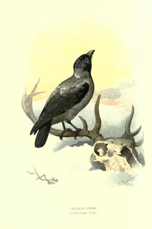 Familiar Wild Birds   Swaysland { 1883}