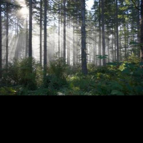 Light filtered through trees enhances my meandering walk.