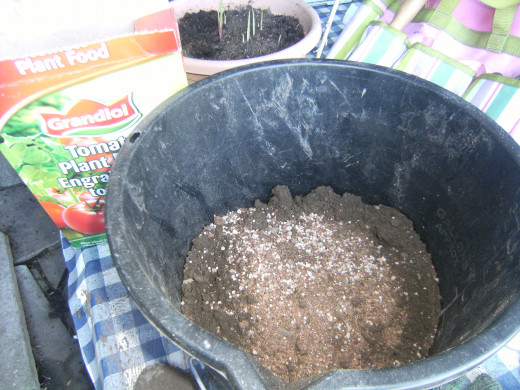 This small bucket was used to grow my potatoes